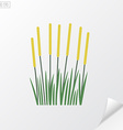 Reeds on white background vector image