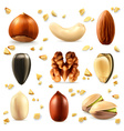 Nuts icon set vector image