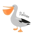 Cartoon pelican isolated on white vector image