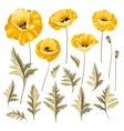 Set of poppy flowers elements vector image