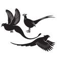 pheasant vector image