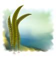 Japanese kelp laminari vector image
