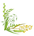 corner with herbs and cereal grass floral design vector image