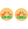 Two cows on meadow fields vector image