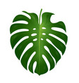 monstera leaf vector image vector image