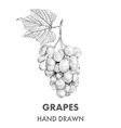 Sketch of grapes cluster with a leaf Hand drawn vector image
