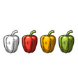 sweet bell pepper vintage engraved vector image