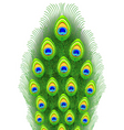 Peacock feathers illustration vector image