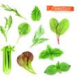 Herbs set vector image vector image