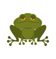 Frog Green melancholy Toad Cute freshwater with vector image