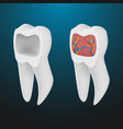 realistic 3d tooth set healthy teeth set care vector image