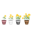 Set of Cosmos Flowers in Flower Pot vector image vector image