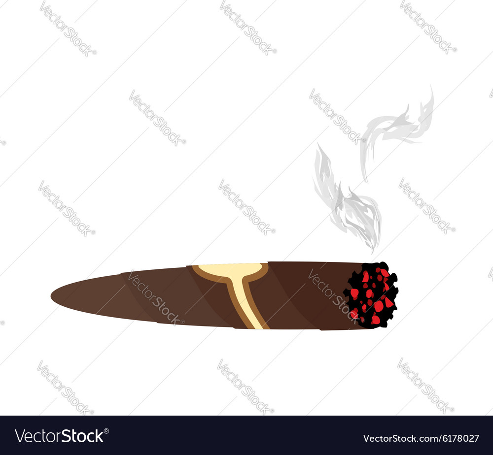 Cigar and smoke on a white background an expensive vector
