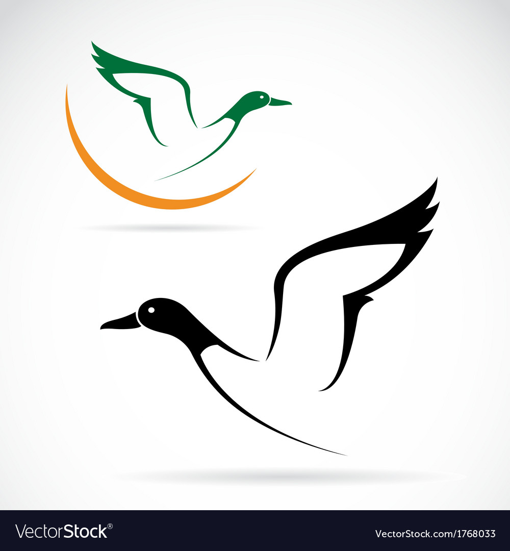 Flying wild duck vector