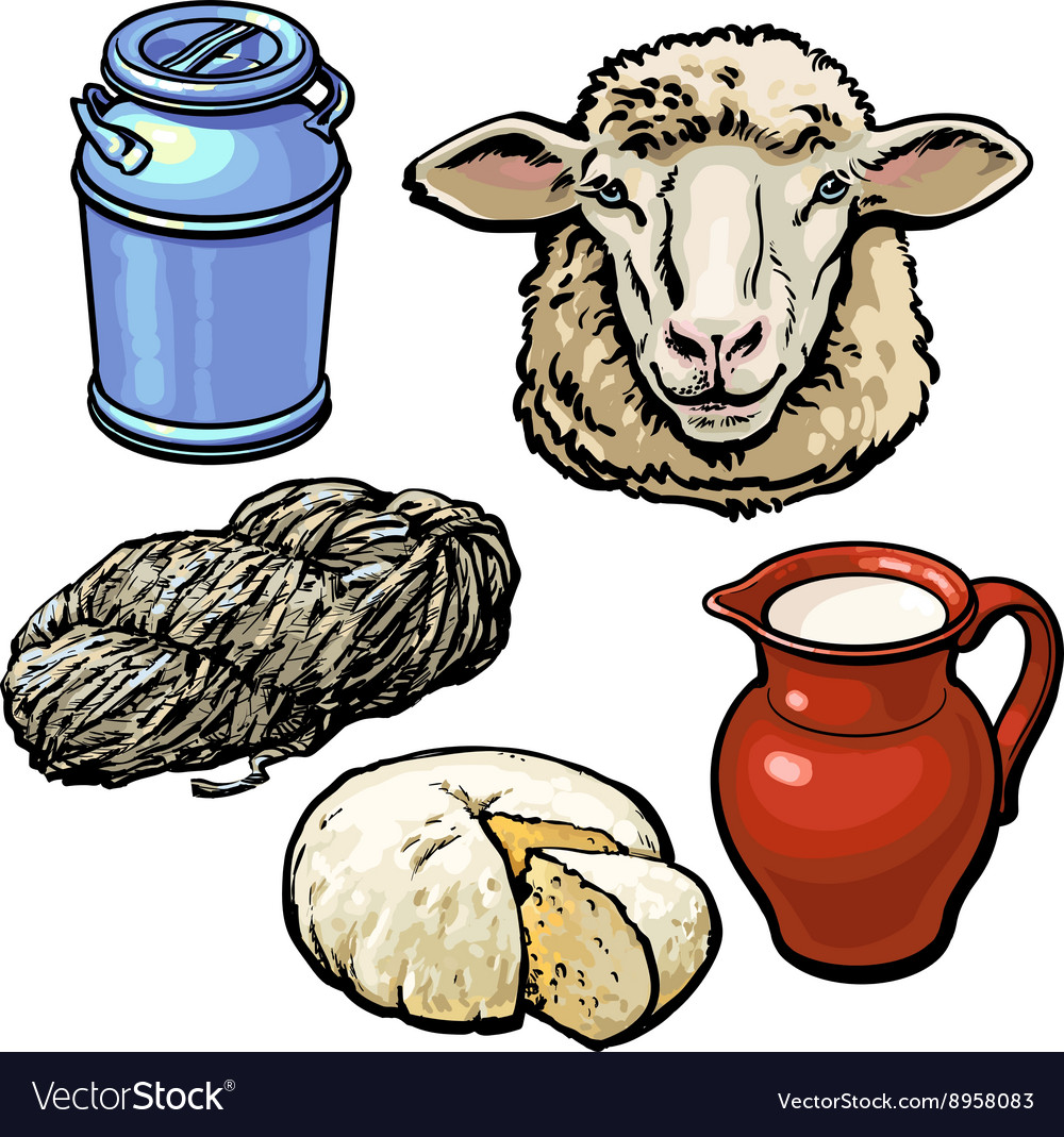 Head of sheep and production products vector