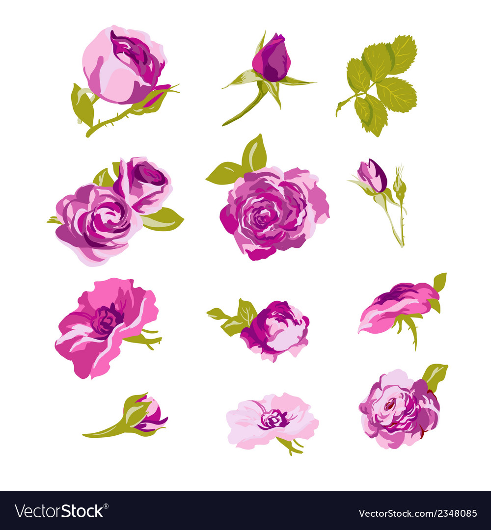 Set of floral design elements flower collection vector
