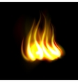 New realistic fire flame vector image