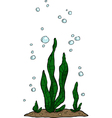 water plant vector image