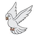 Flying white dove vector image