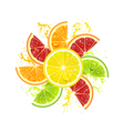 Citrus Fruits in the Form of a Flower vector image