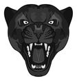 Panther Portrait Angry wild big cat vector image