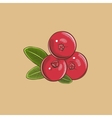 Cranberry in vintage style Colored vector image