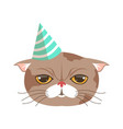 cute cat party hat funny cartoon animal character vector image