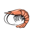 color prawn vector image