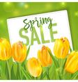 Spring Sale Banner Sale background Big sale vector image