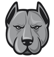 pit bull head - pit bull terrier vector image vector image