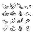 leaf vegetarian herb icon set in thin line style vector image