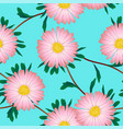 pink aster flower on blue background vector image