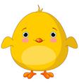 Yellow Chick vector image