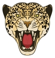 Leopard Portrait Angry wild big cat vector image