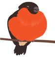 Bullfinch on Branch Isolated vector image