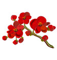 red orchid brunch vector image