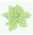 Green Plant vector image vector image