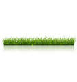 Beautiful green grass Vector Image