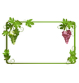 frame with ripe grapes vector image