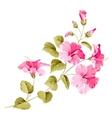 Flower hibiscus vector image