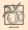 hand drawn peaches vector image