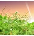 Green Goose Grass vector image
