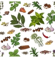 Seamless pattern of hand drawn spices and herbs vector image vector image