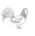 A monochrome sketch of a rooster vector image