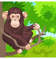 funny monkey chimp in the jungle vector image