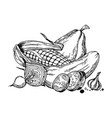 still life vegetable engraving vector image