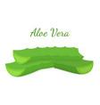 aloe vera slices cartoon flat style vector image