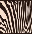 zebra pattern for wallpaper fabrics designs vector image