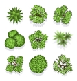 Top view different plants and trees set for vector image