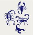 Scorpion Pandinus imperator vector image vector image